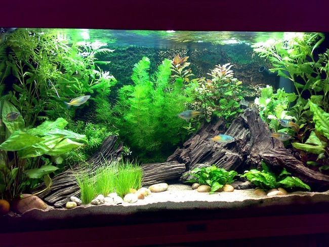 Planted with driftwood