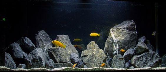 Yellow Lab Rockscape